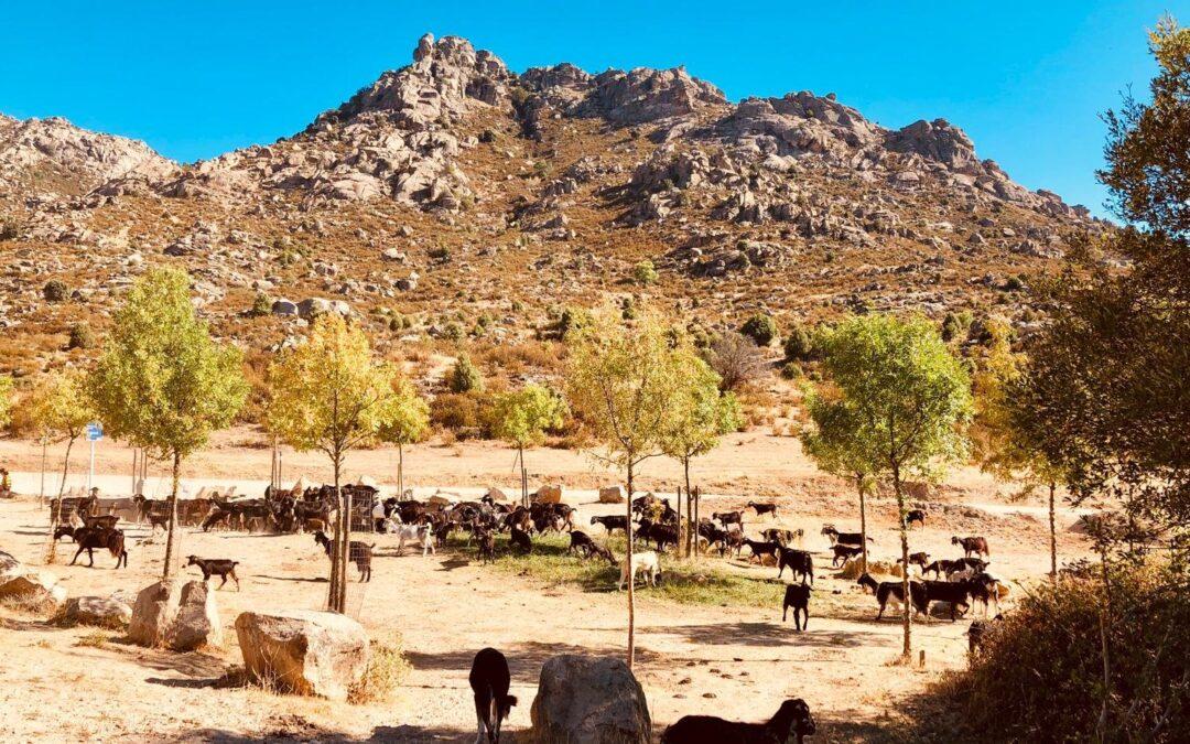 Ya se están creando retos con amigos y empresas para afrontar el Trailcáncer de 26 de junio en la Sierra de Guadarrama